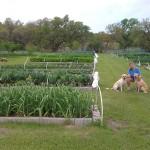 Donna with Farm Security - Millie & Sam