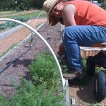 Donna harvesting carrots