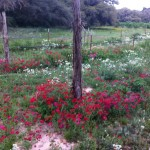 Wild flowers beneath the berries