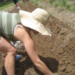 Julie combing through the dirt for potatoes